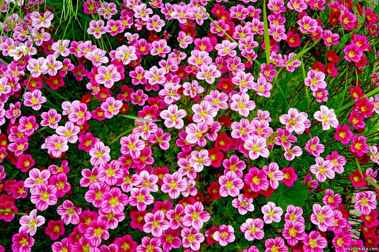 Картинки на обложку с цветами