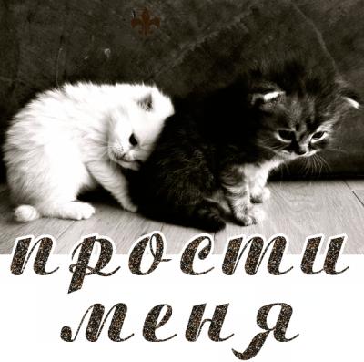 Картинка с котом надпись прости меня, технологии открытка февраля