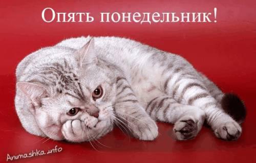 открытки понедельник:
