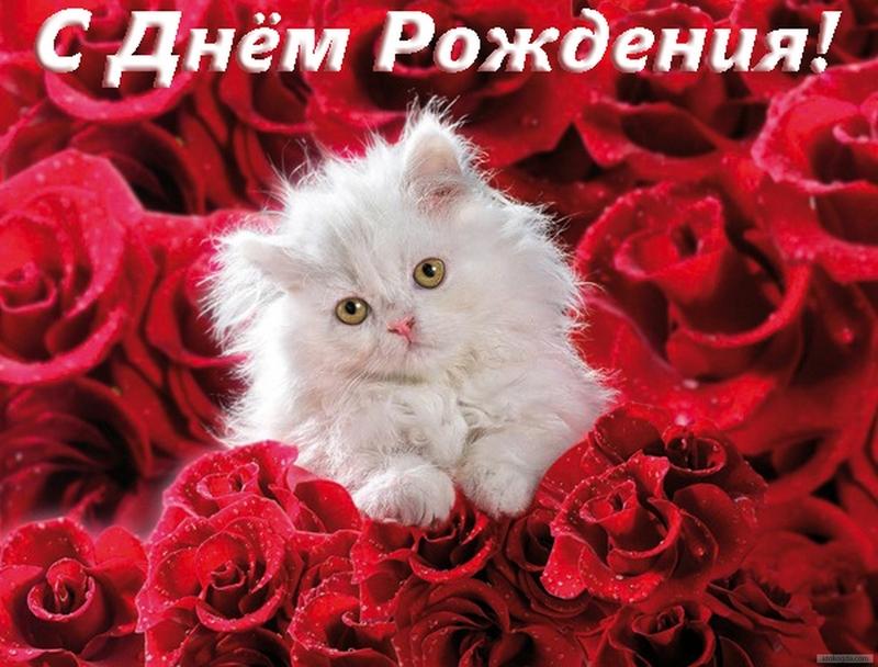 Открытки с кошками днем рождения