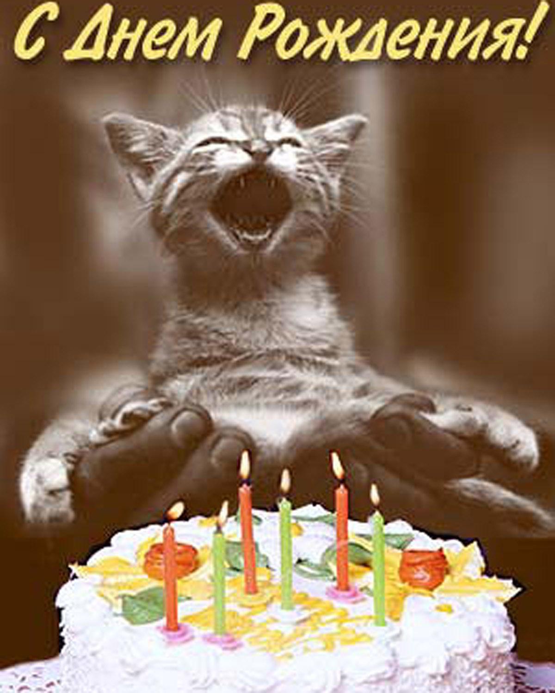 Котик с поздравлением